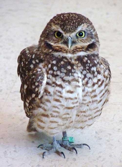 Saskatchewan Owl Interpretive Centre